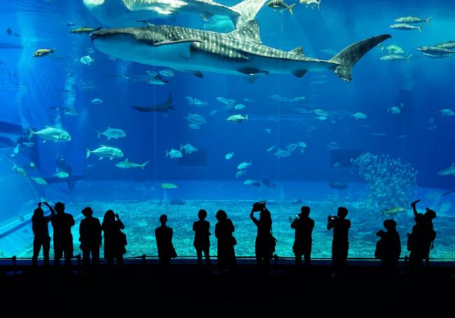 水族館デートは記念日の定番